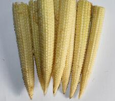 Sweet Corn Seed: Mini Sweet Sweet Corn Seeds   Fresh Seed   FREE Shipping