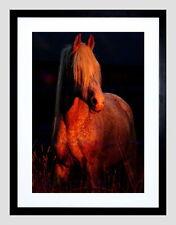 85212 ARABIAN HORSE PONY SUNSET BLACK FRAME MOUNT Decor WALL PRINT POSTER FR
