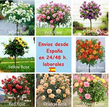 Semillas árbol de rosas en colores diversos