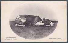 CACCIA 84 CANE HUNTING DOG L'addestramento del cane da ferma Cartolina