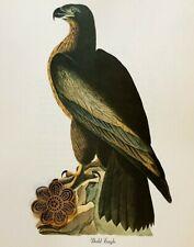 Vtg 1980's Audubon Art Print Full Color Litho RAPTOR PREY BIRDS *** SEE VARIETY