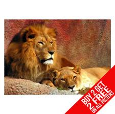 Lion King of the Jungle Poster art print A4 A3 T-Achetez 2 Obtenez Tout 2 GRATUIT