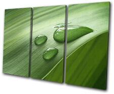 Grass Water Drops Floral TREBLE DOEK WALL ART foto afdrukken