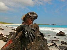 Marine Iguana Galapagos Islands Lizard Animal Nature Giant Wall Print POSTER