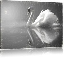 Cisne en el Lago Foto en Lienzo Decoración de Pared Impresión Artística