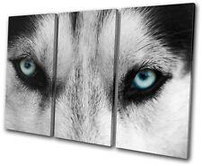 Animals Wolf Eyes Wild TREBLE TOILE murale ART Photo Print