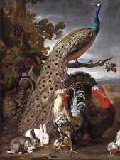 PEACOCK TURKEY RABBIT rooster D. de Coninck Tile Mural Backsplash Marble Ceramic
