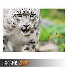 Amazing White Tiger (3505) Animal Poster-Photo Poster print ART * Toutes Les Tailles