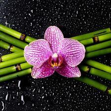 Stickers muraux déco : bambou orchidée 1224