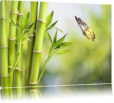 Bambus mit Schmetterling  Leinwandbild Wanddeko Kunstdruck