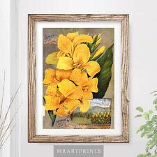 VINTAGE FLOWERS Art Print Poster Yellow Canna Sunbeams Floral Gardening Seeds