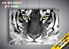 Poster Testa Tigre Bianco Occhi Brillante