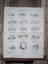 MUNCHENER BILDERBOGEN Circa. 1880/1890 PLANCHE Nr 325
