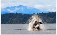 Orca Orca Balena Muro Tatuaggio Parete Adesivo Parete Adesivo r0678