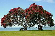 155248 Pohutukawa Trees Beautiful Cornwallis Beach Wall Print Poster AU
