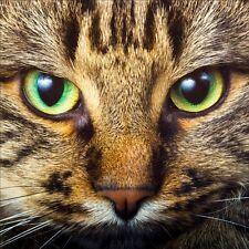 Stickers muraux déco : chat 1247