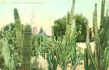 Riverside,CA. Cacti in the City Park