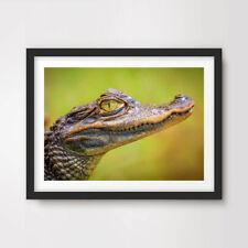 Fotografía de vida silvestre bebé Cocodrilo Animal Impresión de Arte Pared Póster Imagen Reptil