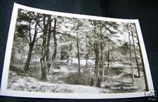 Vintag Real B & W Photo Postcard View DEURNE BOSGEZICHT