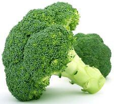 Broccoli Seed: Atlantic Broccoli Seeds Fresh Seed Free Shipping!