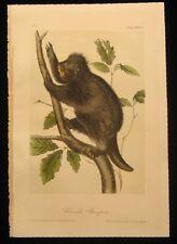 1851 Original Audubon 1st Ed Octavo Quadropeds Animal Canada Porcupine Plate 36
