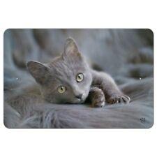 Gray Domestic Shorthair Kitten Cat Fur Home Business Office Sign
