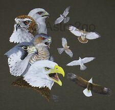 SOARING RAPTORS--Birds Prey Eagle Hawk Falcon Osprey Nature Science T shirt S-2X
