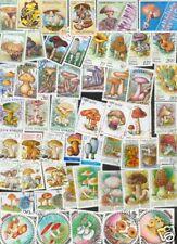 300 verschiedene Pilze ,  Mushrooms , Champions
