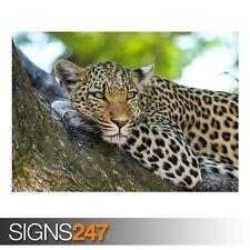 Leopard (3345) Animale POSTER-Foto con POSTER ARTE STAMPA A0 A1 A2 A3 A4