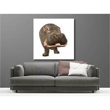 Tableaux toile déco carré hippopotame 24940294