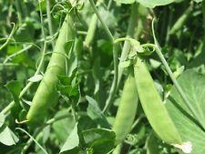 20pcs Pisum sativum Pea Plant Seeds Mixed Vegetable Bonsai Green Perennial Grass