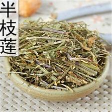 Chinese Herb Scutellaria Skull Cap Herb Scutellaria barbata Ban Zhi Lian