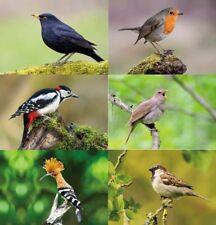 3 D Ansichtskarte Vögel Gartenvögel Postkarte Wackelkarte Hologrammkarte Bild