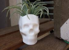 Skull Planter, Succulent Planter, Air Planter Many Colors
