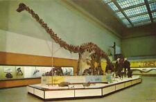 Diplodocus Museum Of Natural History Washington D.C.