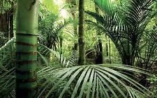 Affiche poster palmier réf 13 ( 3 dimensions, papier mat ou papier photo)