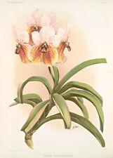 Vanda Sanderiana By Joseph Sander Floral Print