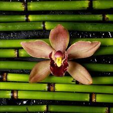 Stickers muraux déco : bambou orchidée 1225