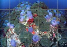 35 Tiles Art Ceramic Mural Ocean Backsplash Bath Decor Tile #288