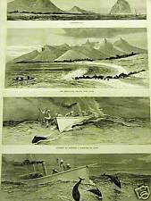 MAURITIUS PORT LOUIS TAMARIND BAY 1882 Art Print Matted