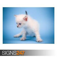 Carino Gatto Mew Mew (3390) Animale POSTER-Foto Poster Arte Stampa A0 A1 A2 A3 A4