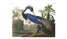 John JAMES AUDUBON Louisiane HERON des oiseaux de l'Amérique Vintage print