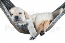 Poster kleiner Hund liegt in der Hängematte, gelber Labrador, ... - B. Margraf