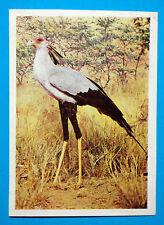Figurina Panini-ANIMALI DI TUTTO IL MONDO 1965-n.193-SERPENTARIO-rec