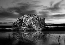 Fototapete Tapete Wandbild Vlies 1D20087696 #GESCHENK GRATIS# Jaguar in schwarz