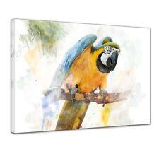 Leinwandbild Reproduktion Aquarell - Papagei