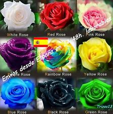 Semillas  rosas disponible en 9 tonos diferentes (10-20 ó 30 semillas)