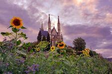 VLIES Fototapete-BLUMEN-(3941V)-Sonnenblumen Kathedrale Wolken Himmel Blüten XXL