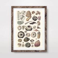 SEASHELLS BEACH SEASIDE ART PRINT Poster Decor Vintage Wall Chart Illustrations