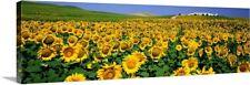 """Field of Sunflowers near Cordoba Andalusia Spain"" Canvas Art Print"